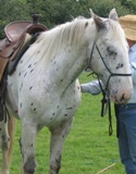 Understand Your Horse.  Natural horsemanship is great for helping problem horses to trust their handler